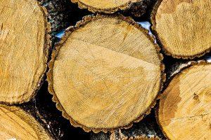 Eikenhouten boomstammen voor bewerking
